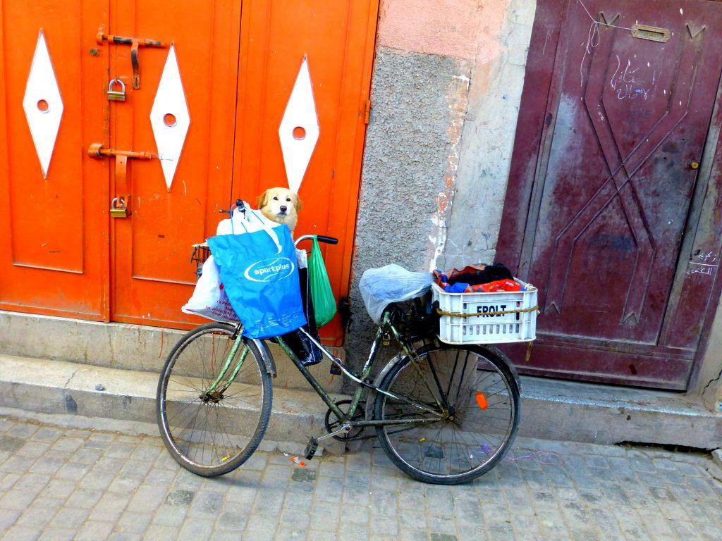 Bikes of Marrakesh