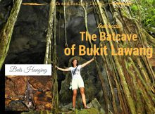 A visit to the batcave at Bukit Lawang, Indonesia