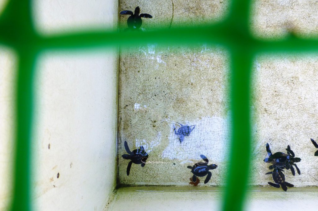 Schildpadden van Nationaal Park Pulau Penang, Maleisie