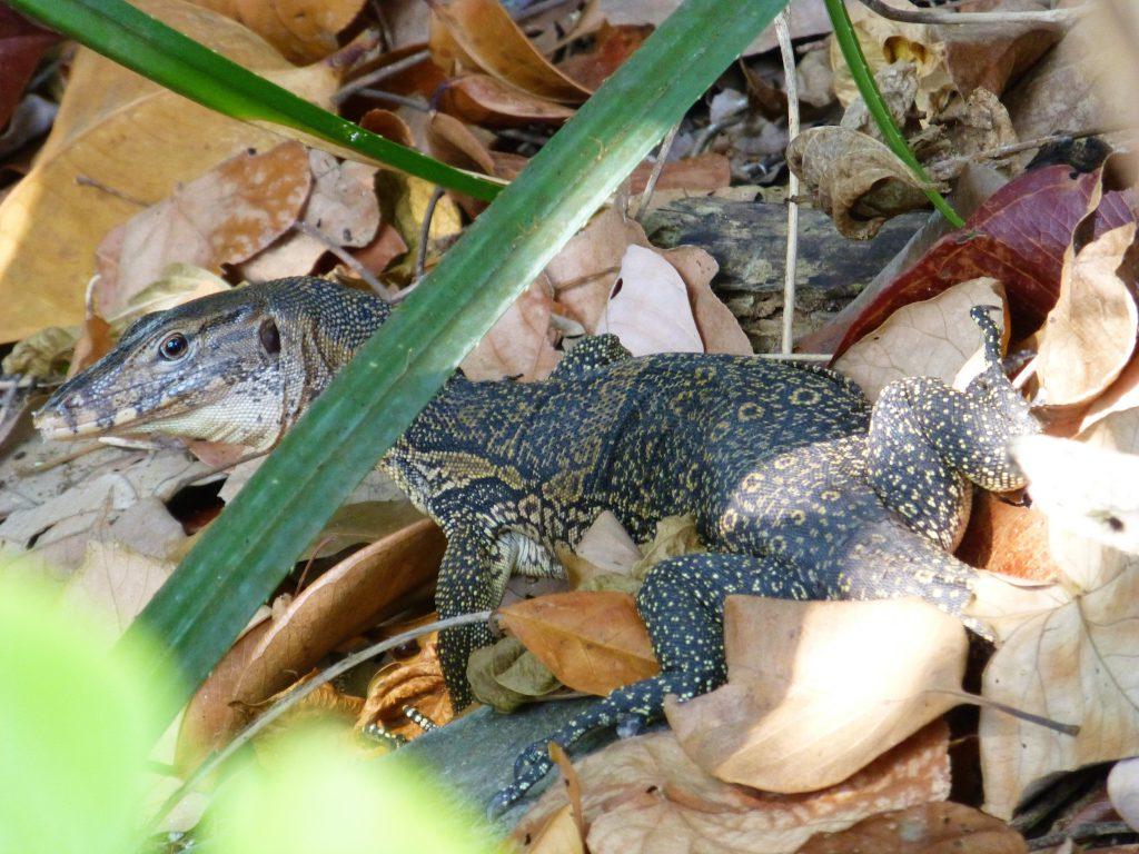 Wildlife in Pulau Penang, Maleisie
