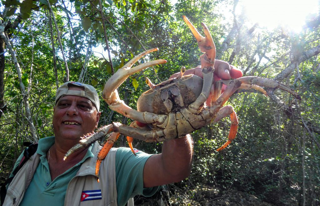 Cuba, Guide showing a big crab!