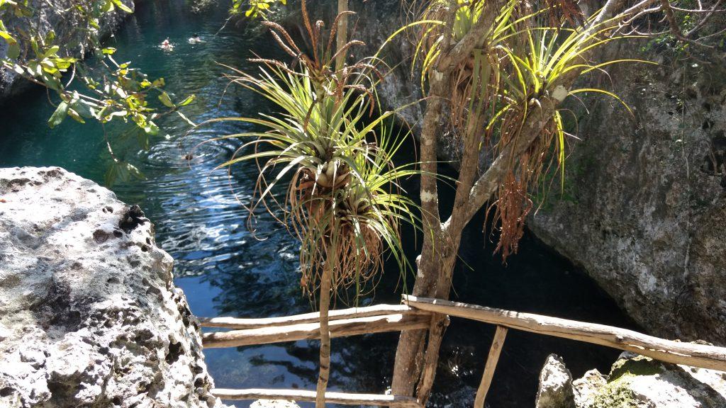 Zwemmen in een Cenote - Playa Larga