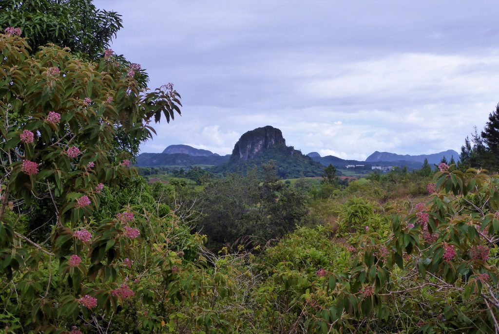 Nature in the Viñales Valley - Cuba