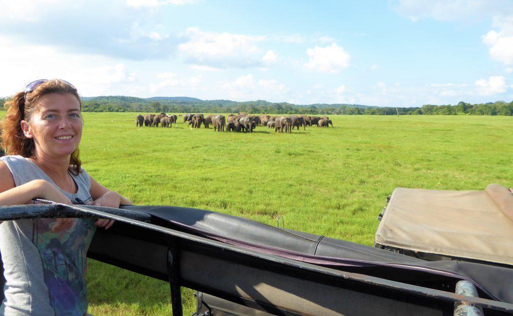 Looking at the elephants in Kaudulla NP
