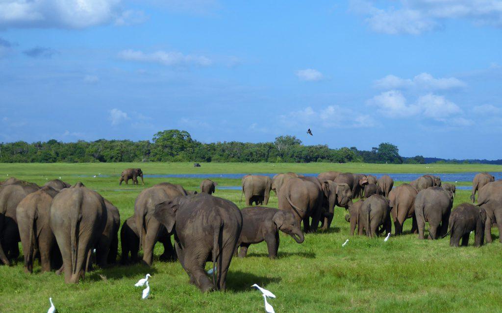 Elephant Safari Kaudulla NP -Sri Lanka