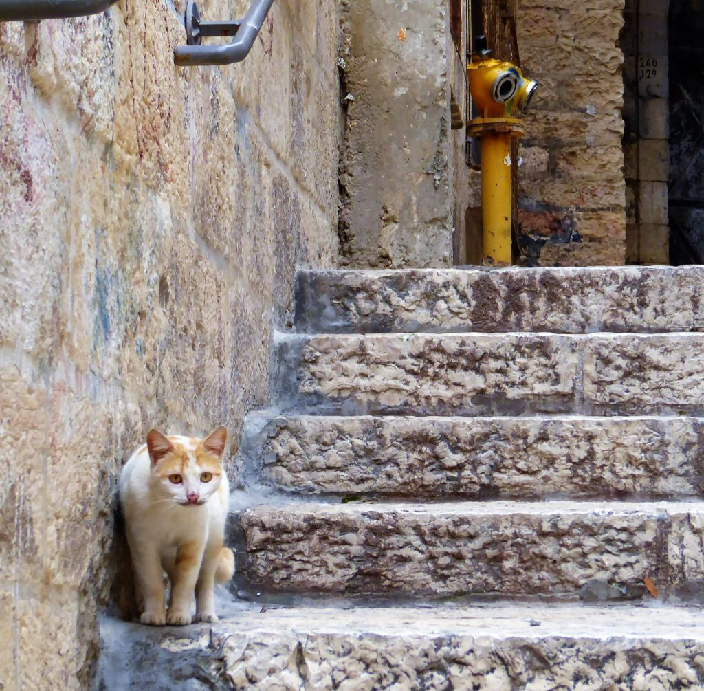 Cats of Jerusalem - Israel
