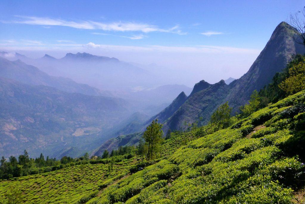 teaplantation Kerala