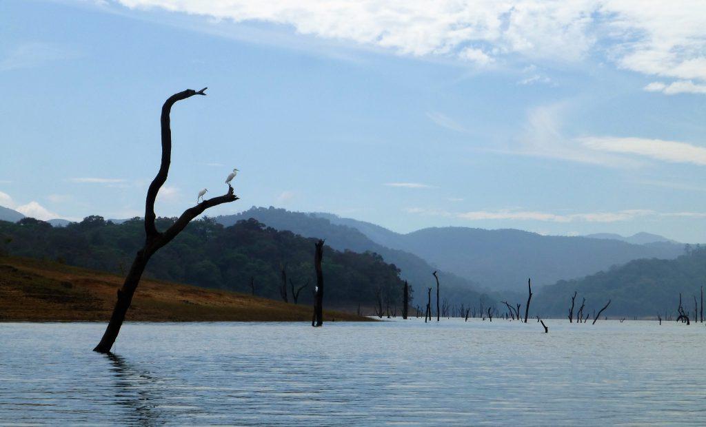 Periyar Tiger Reserve - Two weeks Kerala