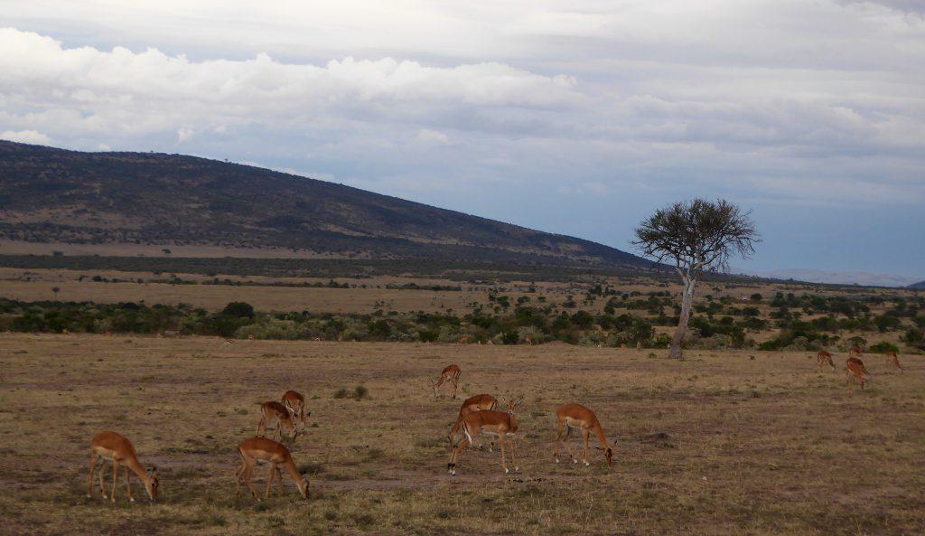 Wildlife Masai Mara - Kenia