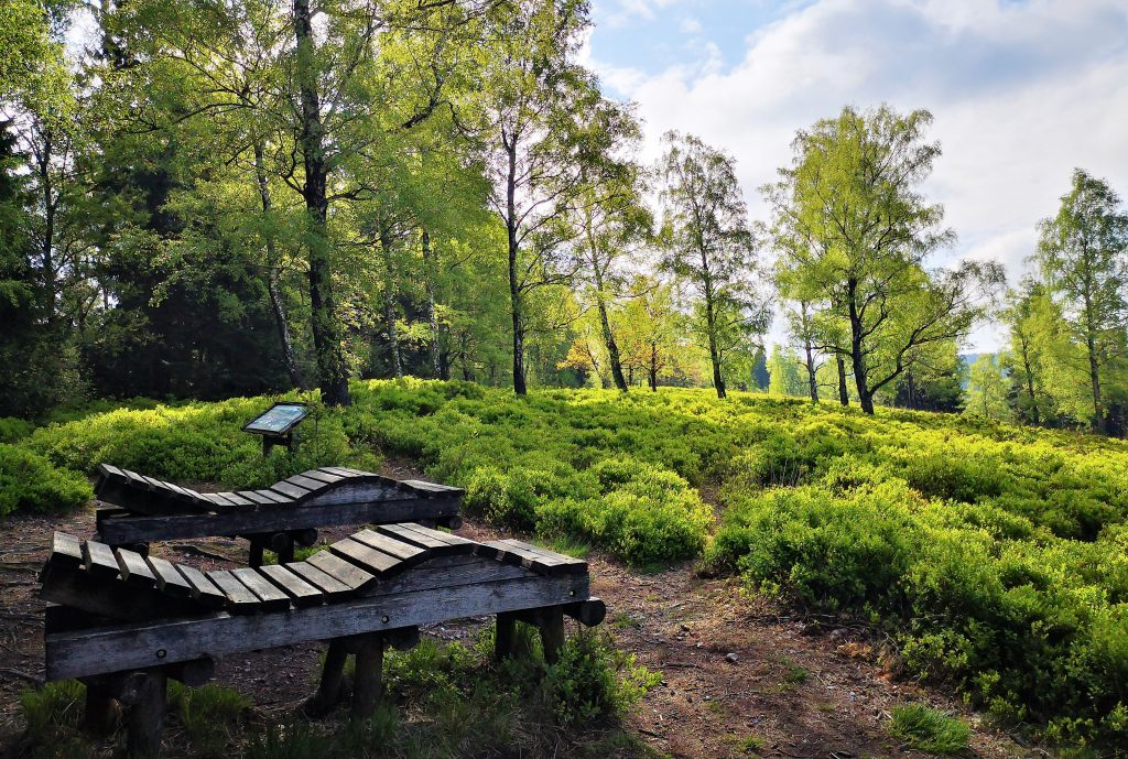Hiking in Germany - Best Benches ever!!