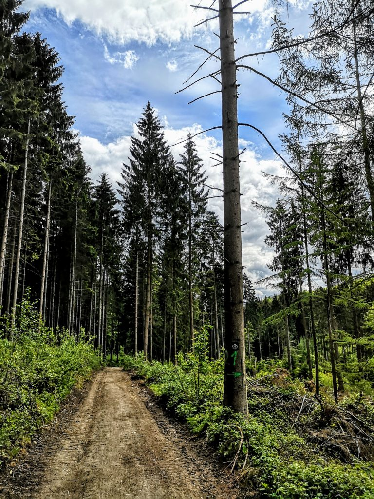 Hiking in Germany