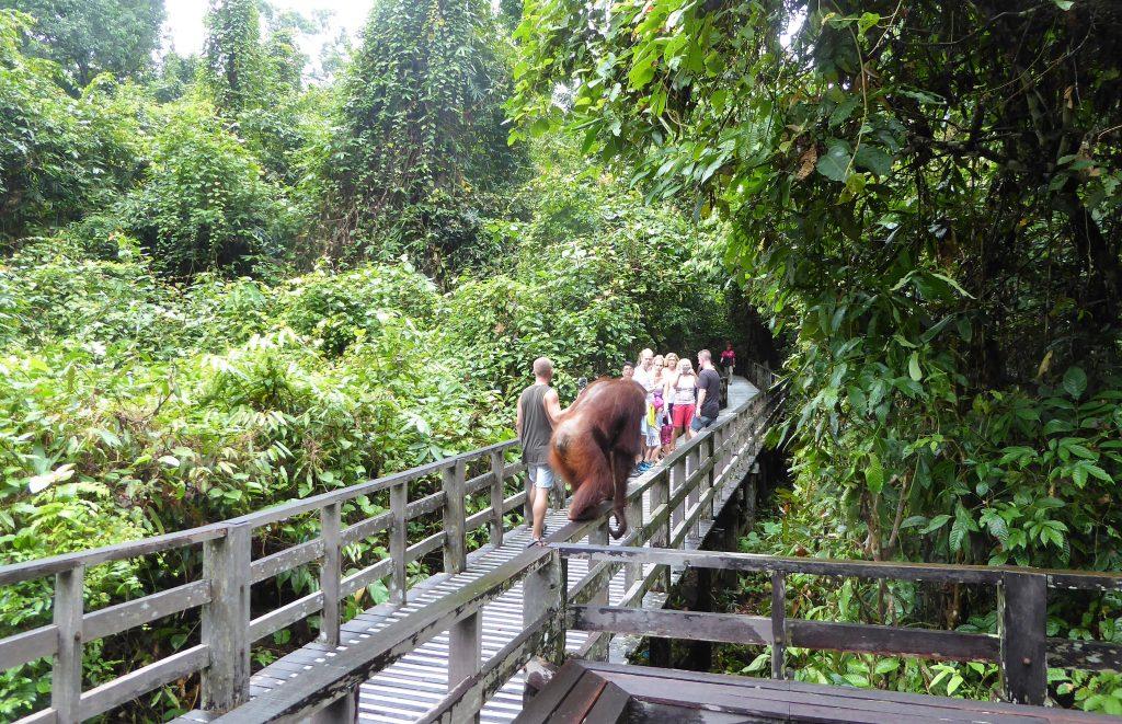 Borneo - Sepilok Rehabilitation centre