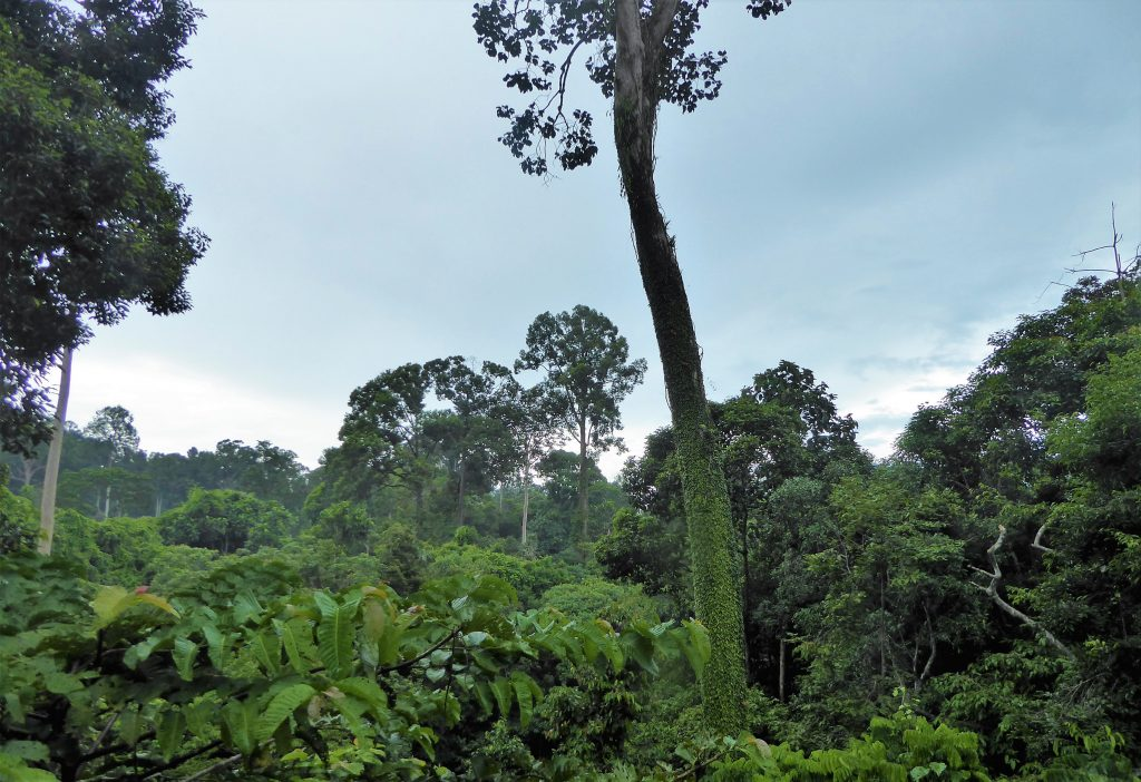 Travel Tips for Borneo