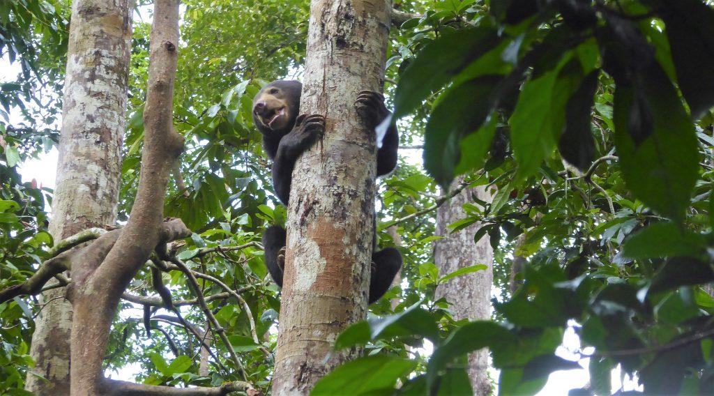 Travel Tips for Borneo