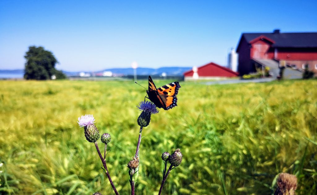 Butterfly in Norway
