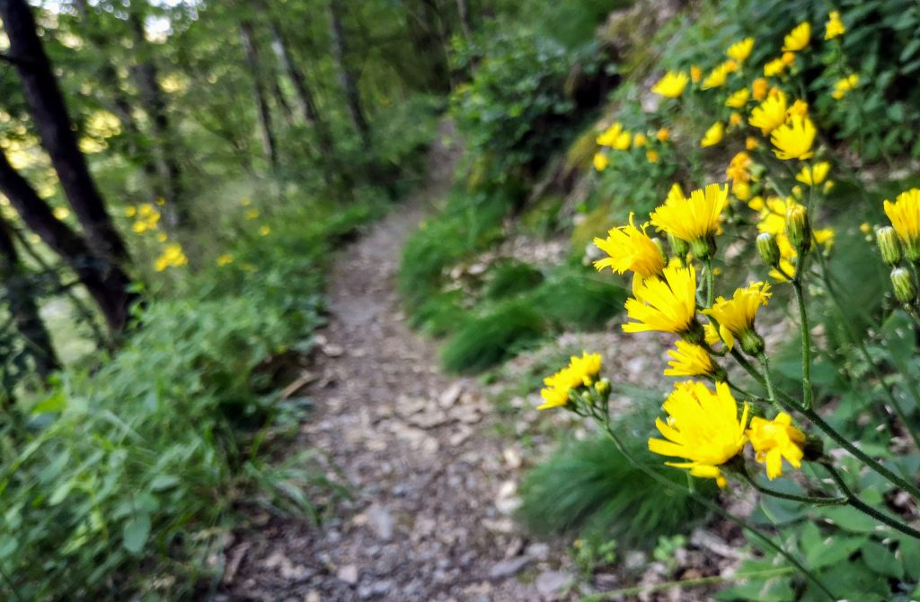 Safe Hiking in Nature - What to do when being bitten by insects - Europe
