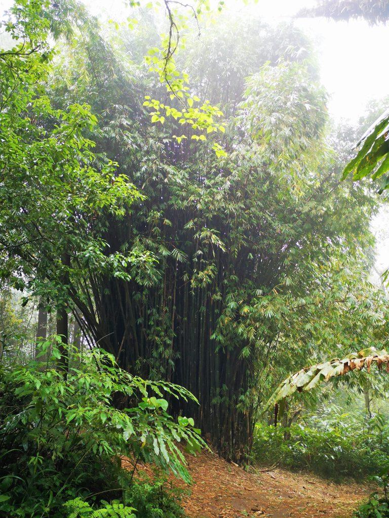 Natuur op Gunung Marapi - Sumatra, Indonesie