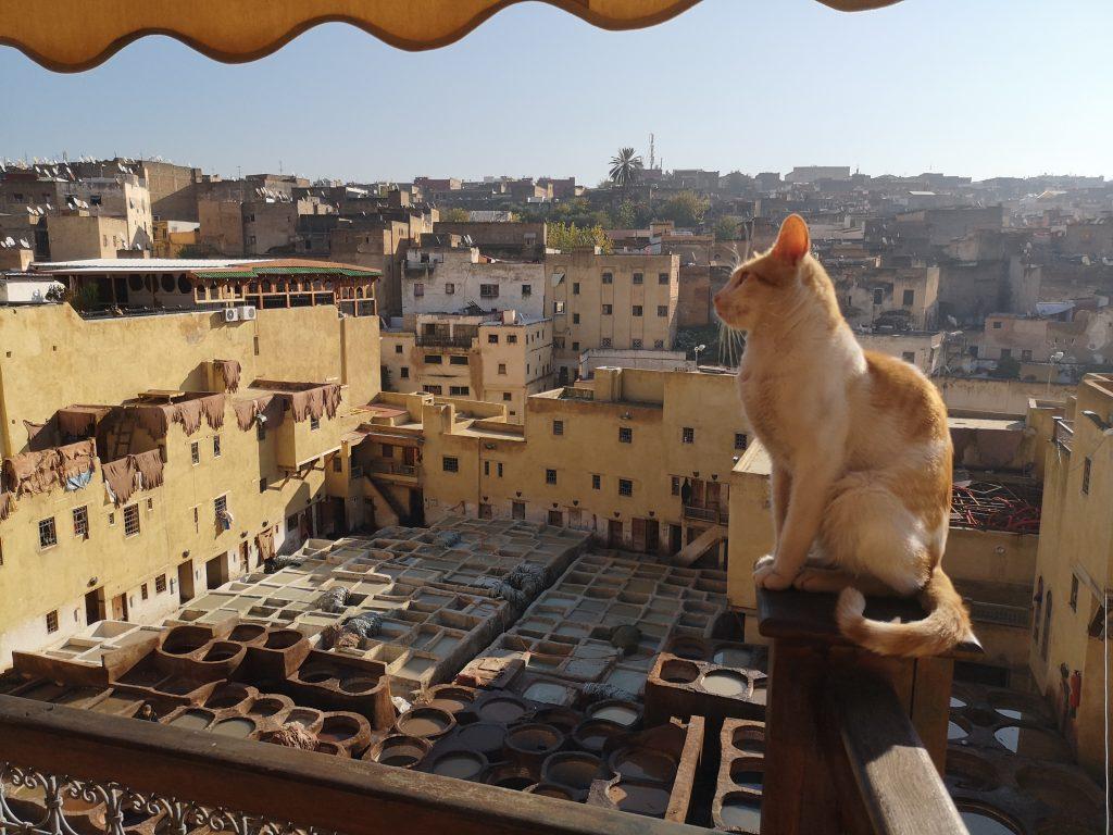 Complete reisgids Fes - de tannerie / leerververij in de medina