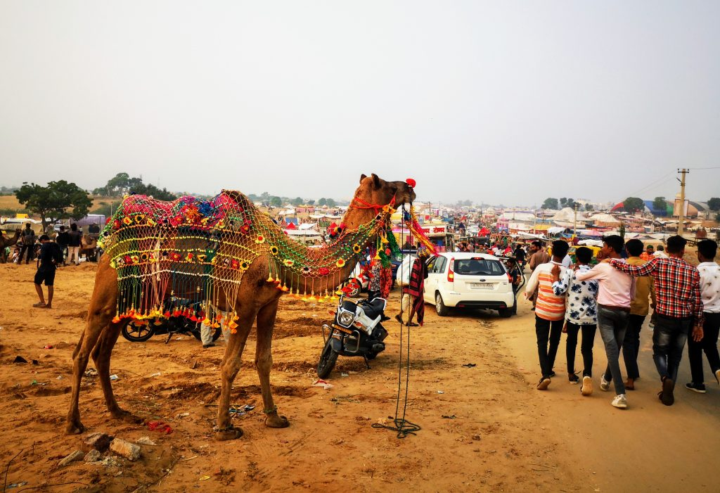 Camelfair Travel Guide Pushkar, Rajasthan - India