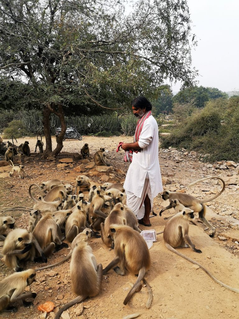 Sick in India : Tikam is feeding the monkeys - Pushkar