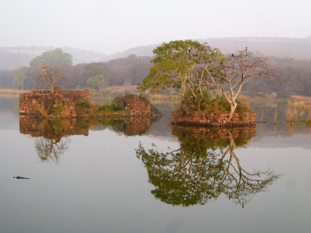 Ranthambore NP early morning