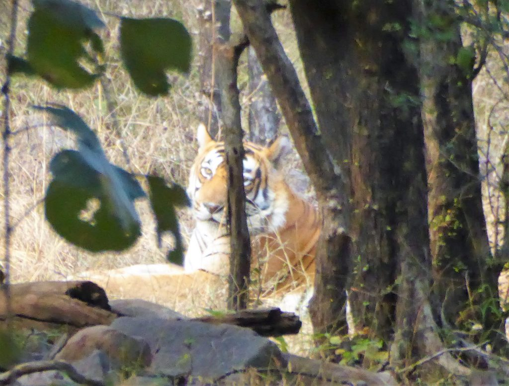 The Best Place for Tiger Spotting in India - Ranthambore NP