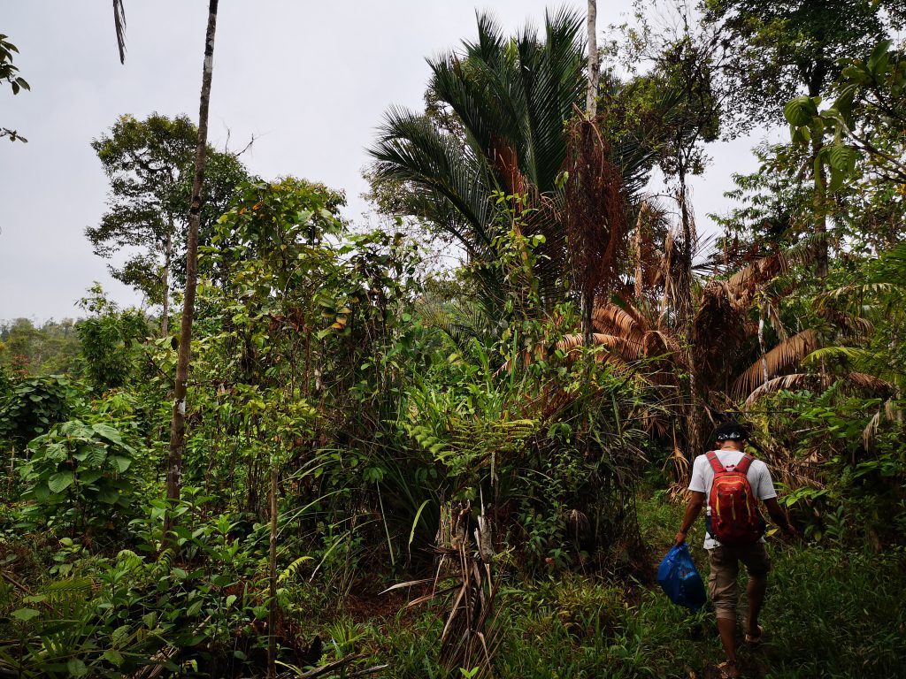 Jungle Trek, Mentawai - Sumatra, Indonesie
