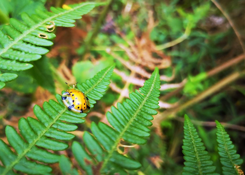 Insects Harau valley - Sumatra Indonesia