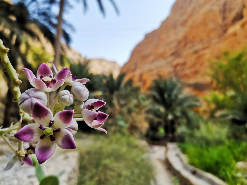 De kleuren van de Wadi Shab - Sur, Oman