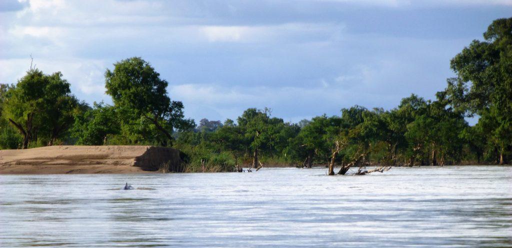 Irriwaddy Dolphin - Si Phan Don, Laos