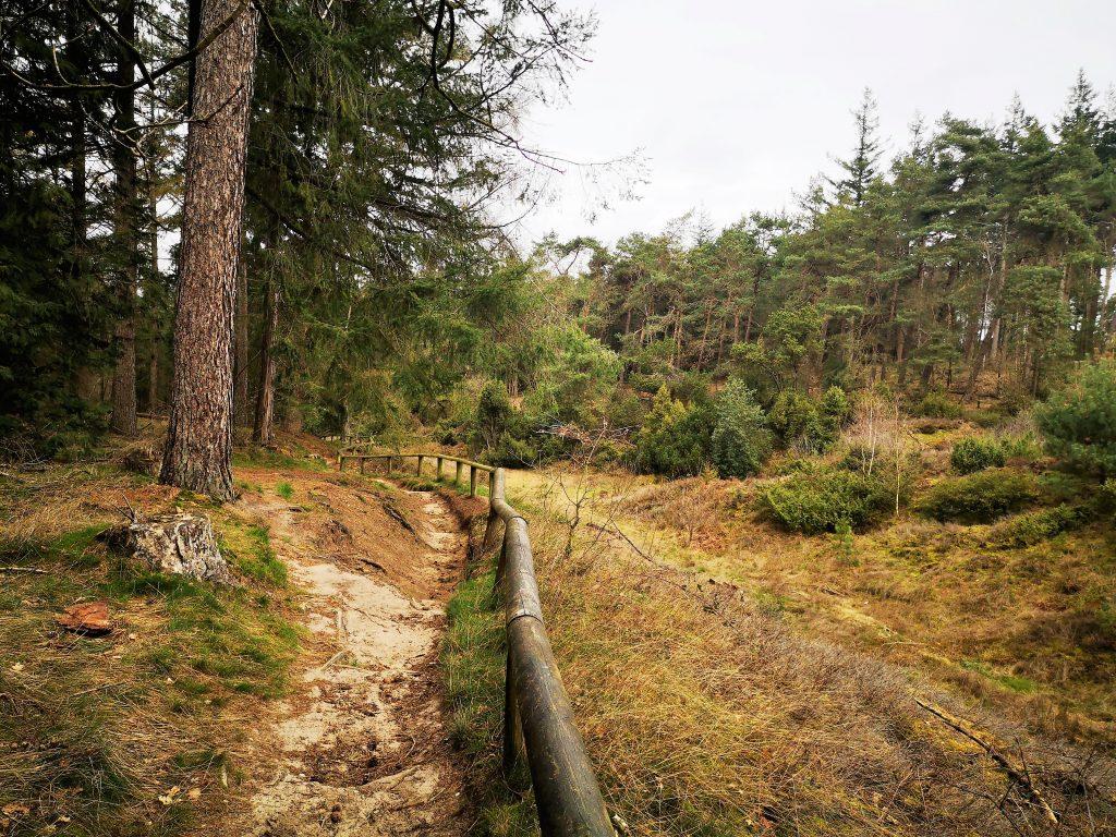 Bergwandeling in Salland - Lemelerberg