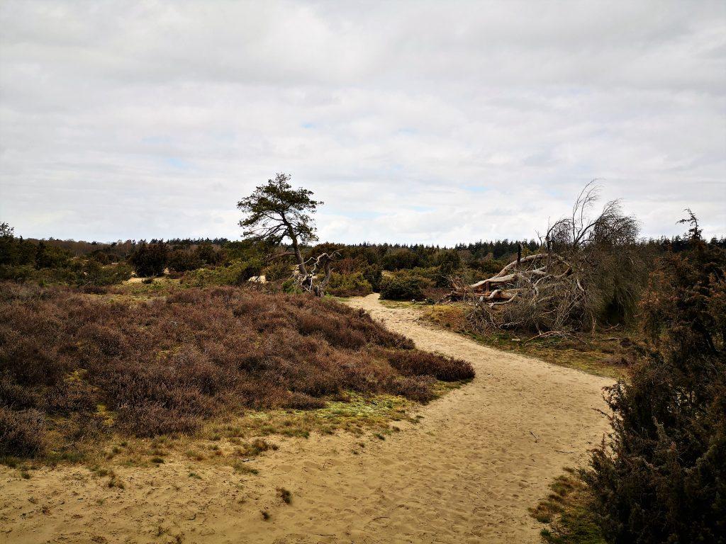 Bergwandeling in Salland - Lemele