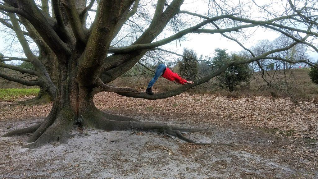 Yoga pose op de grote boom - Lemele