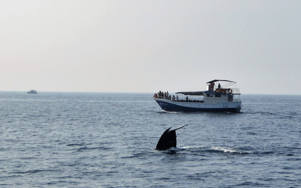 Whale Watching in Mirissa - Sri Lanka