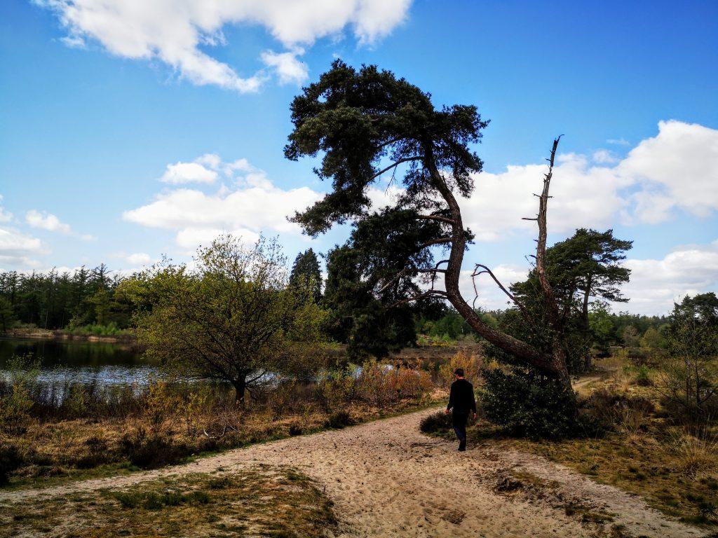 Pad nabij het Zwanenmeer - De Haarplas - Rheeze