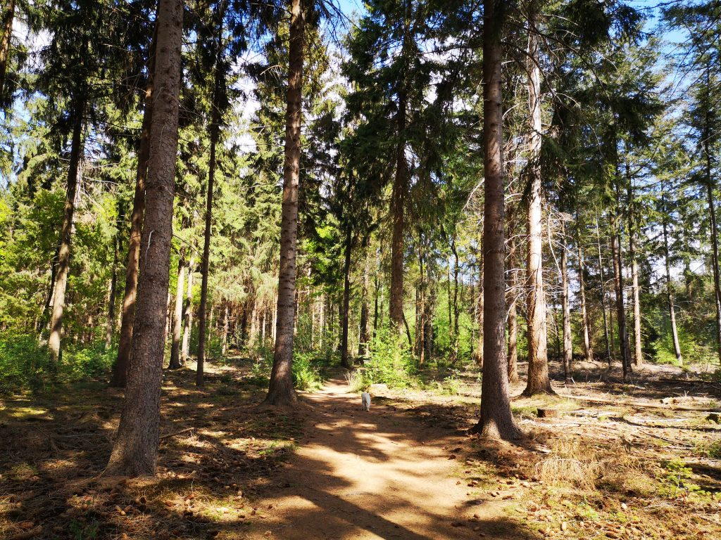 Wandeling Rondom Rheeze - 13.3 km Brinkdorp / Esdorp Rheeze - Hardenberg