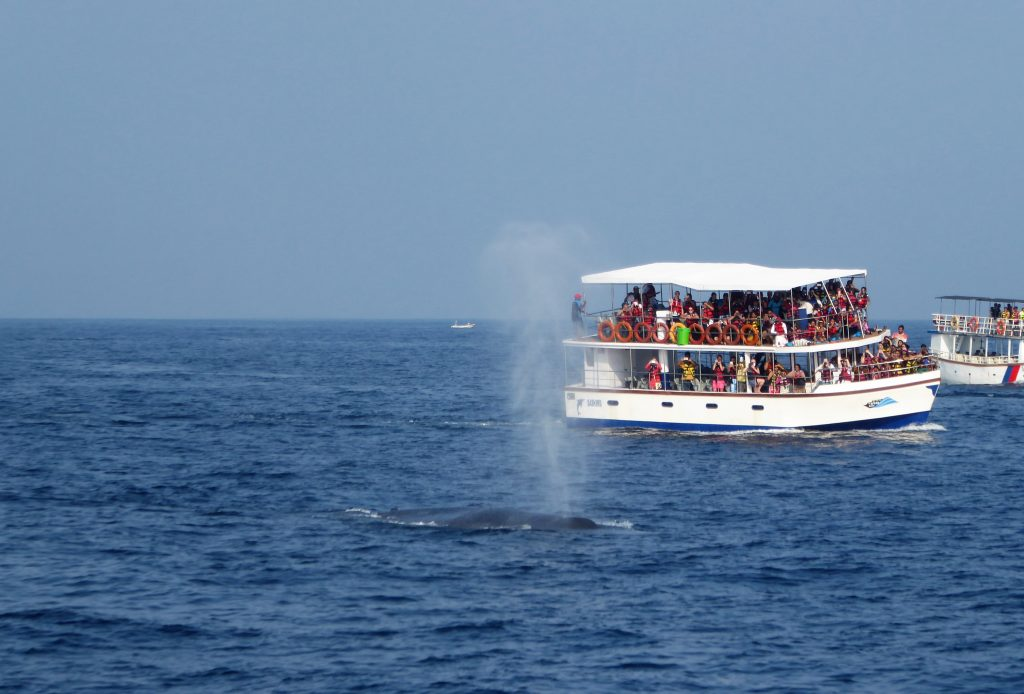 Whale watching at Mirissa and Visiting Galle - Sri Lanka