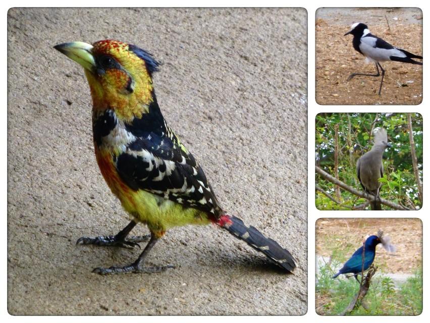 4 dgn Trip met Safari in NP Kruger - Johannesburg - Zuid Afrika