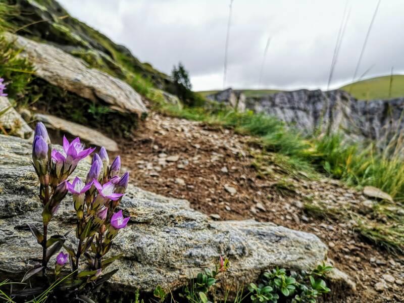 Alpenwandeling Alpe Adria Trail, Oostenrijk