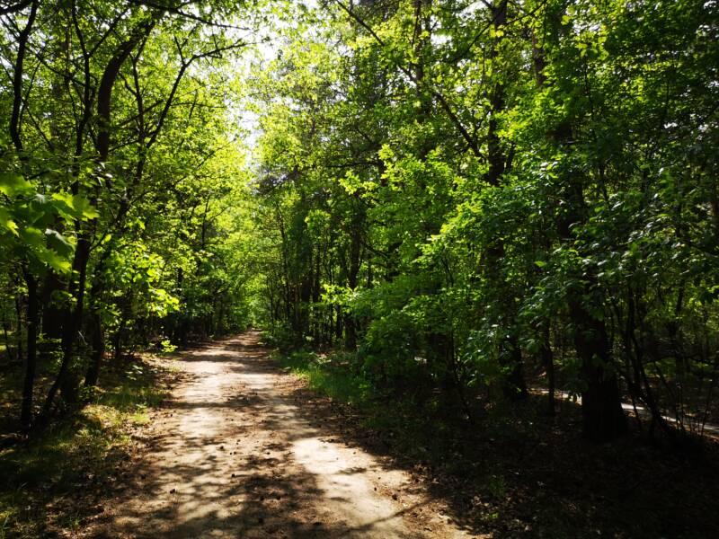 Krishnamurti wandeling Ommen