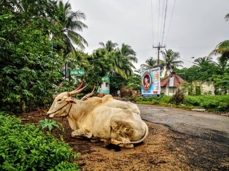 Tamilnadu Run - Rickshaw Challenge