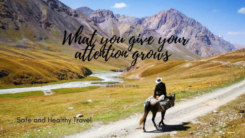 Mindful living - What you give your attention grows