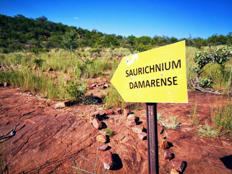 Dinosaurus voetafdruk nabij mt Etjo - Bezienswaardigheden van Namibië
