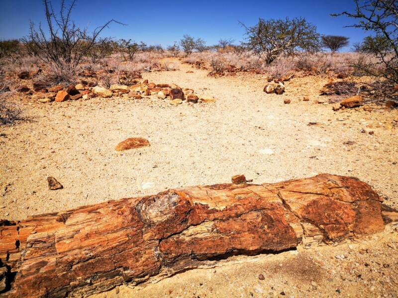 Bezienswaardigheden van Namibië - Petrified forest