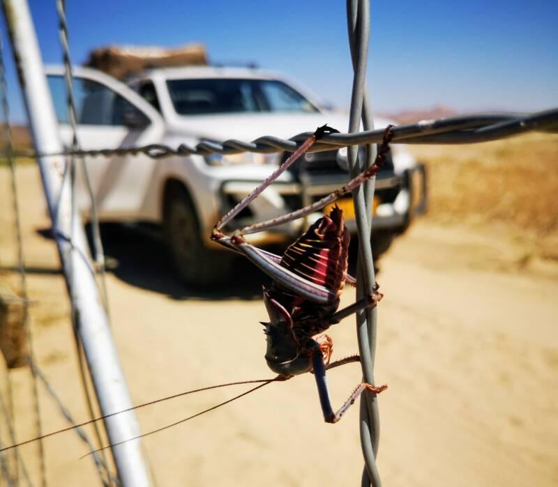 Op safari met je 4WD in Namibië